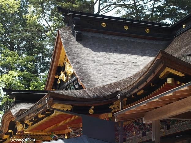 仙台 大崎八幡宮 P4290353