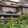 Photos: 祇園白川 P8150636