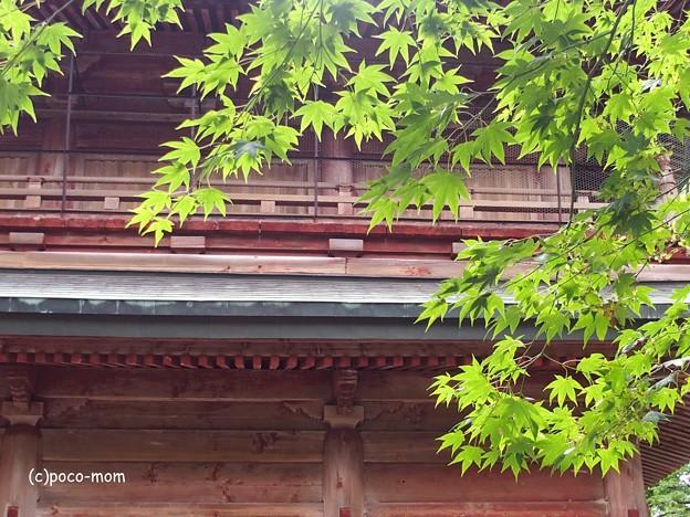 比叡山延暦寺 P8150729