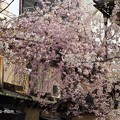 祇園白川 P4130016
