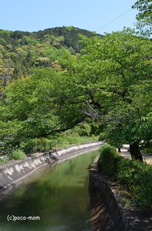 山科毘沙門堂 DSC_0223
