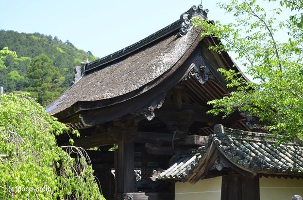 山科毘沙門堂 DSC_0274