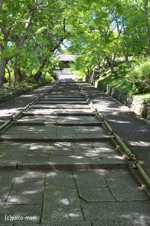 山科毘沙門堂 DSC_0291