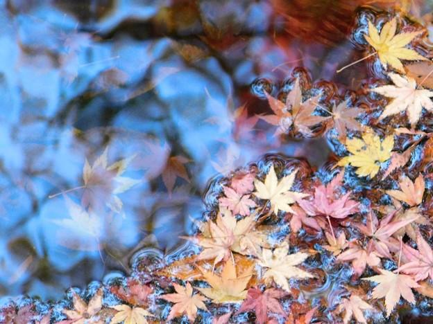 水面下の紅葉