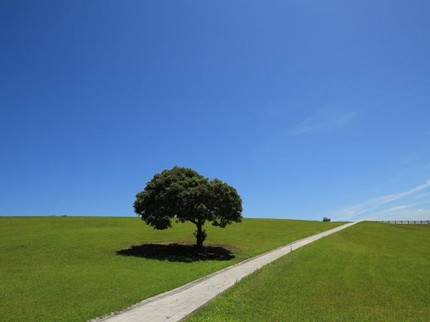 風の丘広場