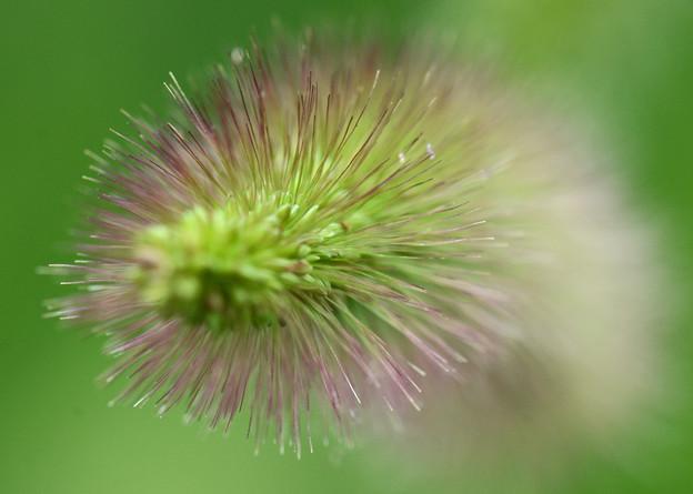 円柱花穂1