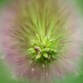 円柱花穂2