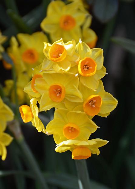 写真: 春の陽ざし