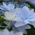 Photos: 梅雨を彩る花