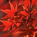 写真: 晩秋の彩