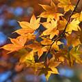 写真: 黄葉映える1