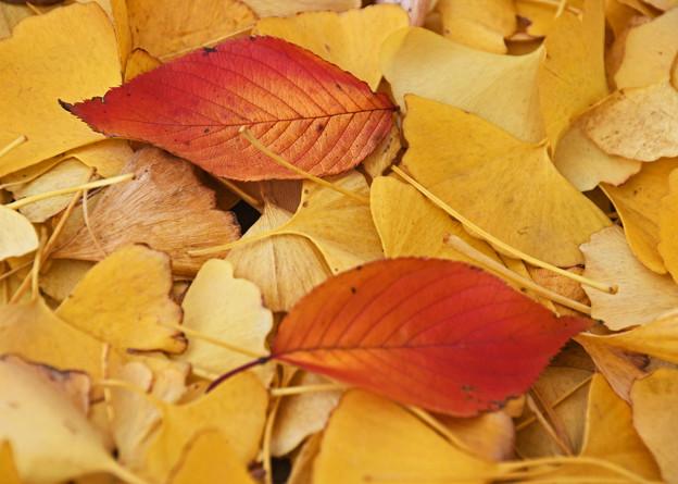 木の葉散る