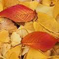 Photos: 木の葉散る