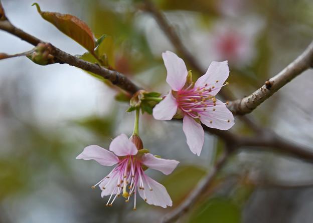 冬空に咲く1