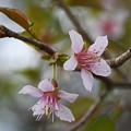 Photos: 冬空に咲く1