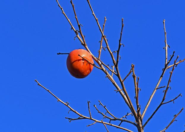 木守柿(きもりがき)