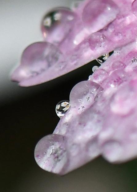 滴に咲く1