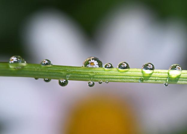 水滴に映る