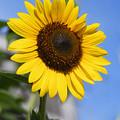 Photos: 太陽のように力強く