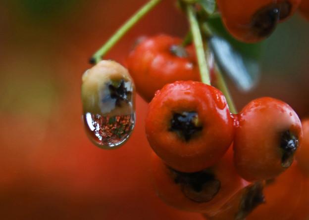 雨上がりの秋彩