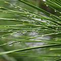 Photos: 雨しずく