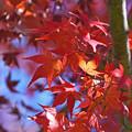 Photos: 晩秋の陽光1