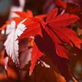 残秋の幻想