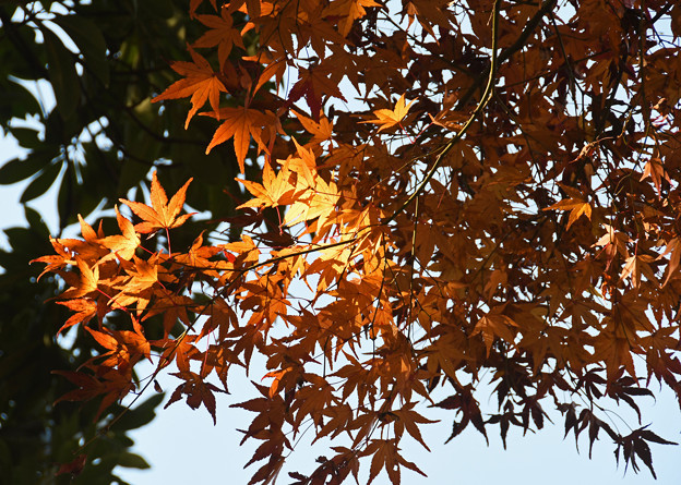 晩秋の射光