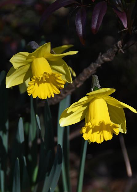 Photos: 春になる
