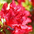 Photos: 春を彩る3