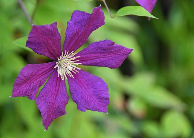花壇に咲く1