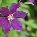 Photos: 花壇に咲く1