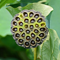 Photos: 蜂巣