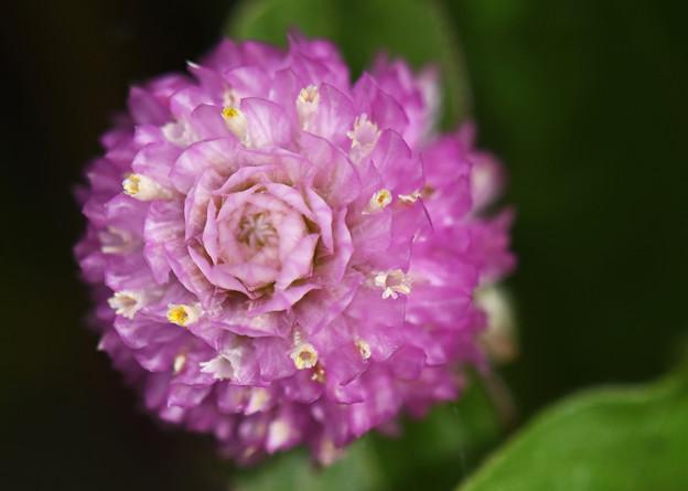 可愛い小さな花