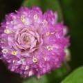 Photos: 可愛い小さな花