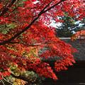 Photos: 平林寺の紅葉