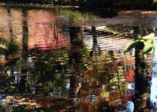 池面に映える