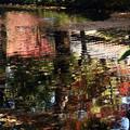 Photos: 池面に映える