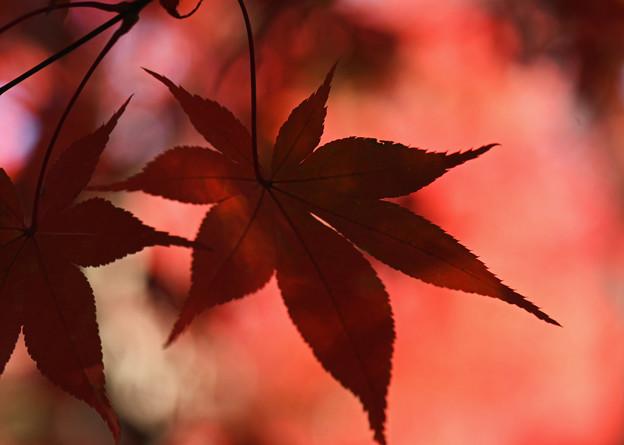 Photos: 秋の名残り