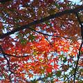 Photos: 晩秋の陽光