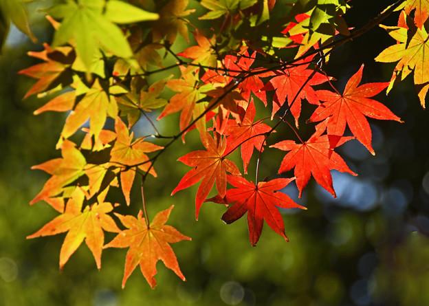 秋色に映える
