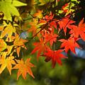 Photos: 秋色に映える