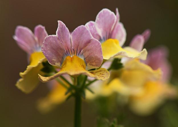 我が家の花壇に咲く花1