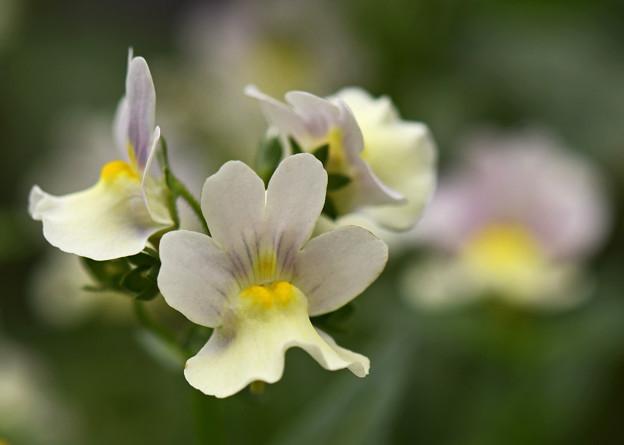 我が家の花壇に咲く花2