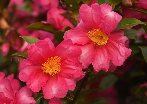 花々が咲き競う