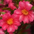 Photos: 花々が咲き競う