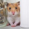 Photos: ネズミ