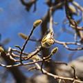 Photos: 春の足音が