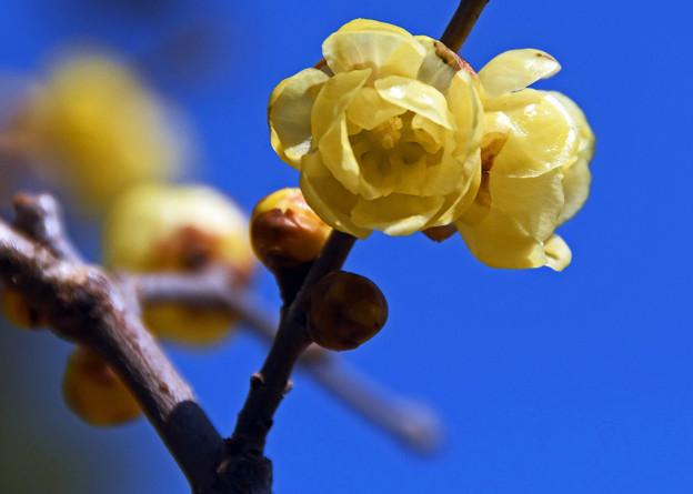 Photos: 青い冬空に映える