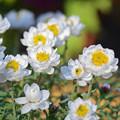 Photos: 早春の花